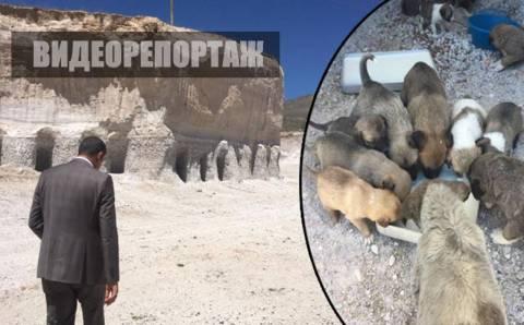 Мэр сделал для бездомных животных «собачий поселок»