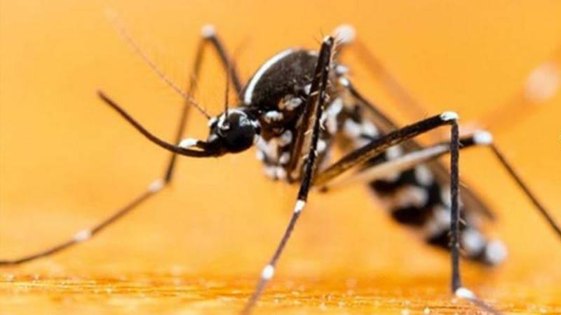 Азиатский тигровый комар атаковал Стамбул и еще 13 провинций