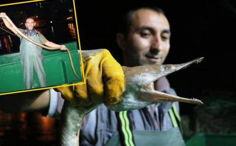 Турецкие моряки удивились необычному улову