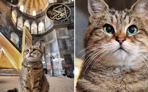 Умерла кошка Гли – хранительница Айя-Софии