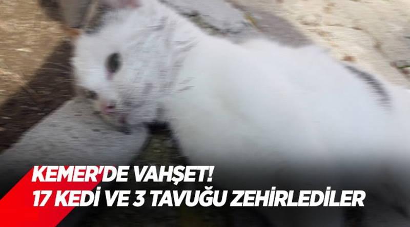 Жандармерия Кемера ищет отравителя 17 кошек