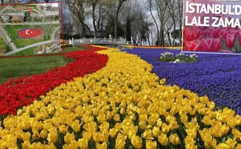 8 млн тюльпанов расцвели несмотря на пандемию