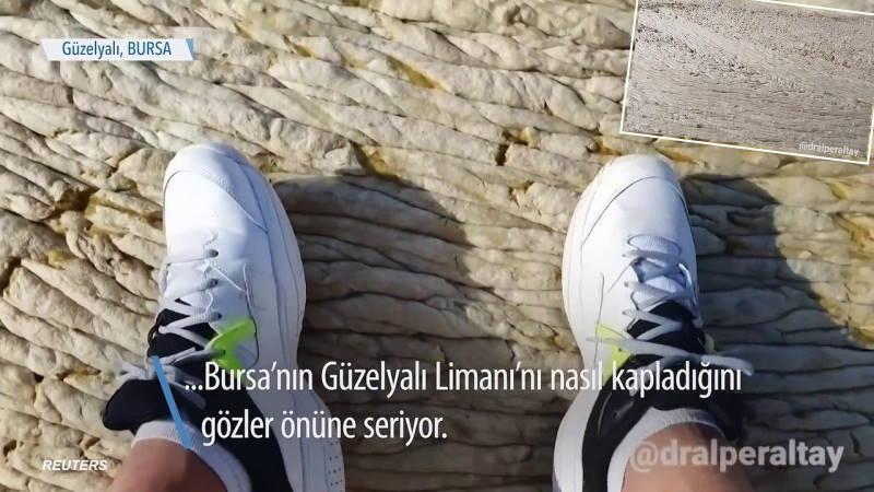 Видео из Турции с «ковром на море» взорвало интернет