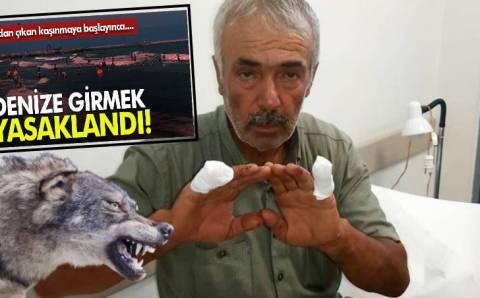 Жалящие медузы в Черном море и волки в Анталье