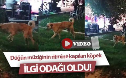 Свадебные танцы уличного пса из Денизли