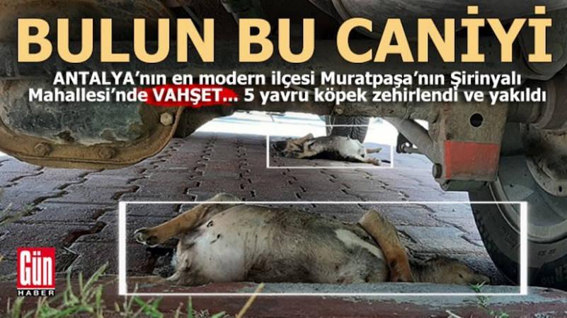 Защитники животных бьют тревогу в Анталии и Анкаре