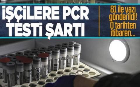 Невакцинированных работников обяжут сдавать ПЦР-тесты