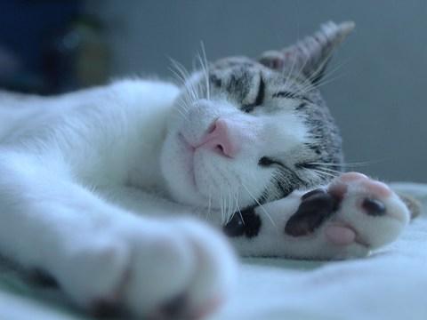 本当に熟睡できると評判の快眠アプリ「Relax Melodies」を試してみた!