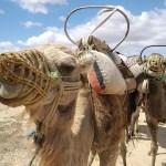 アラブの春をわかりやすくまとめると・・(その1:ジャスミン革命)