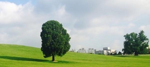 seoul-olympic-park-992727_640