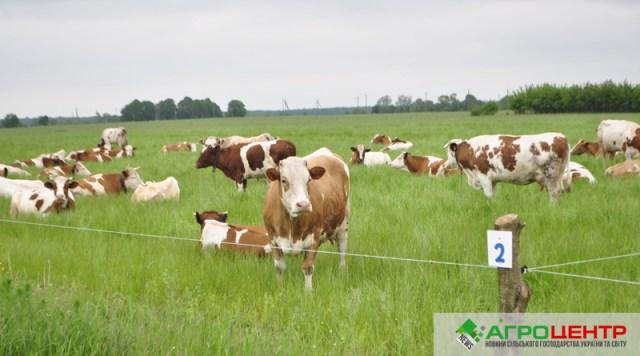 Берімо приклад: досвід успішного фермерського господарства в Україні