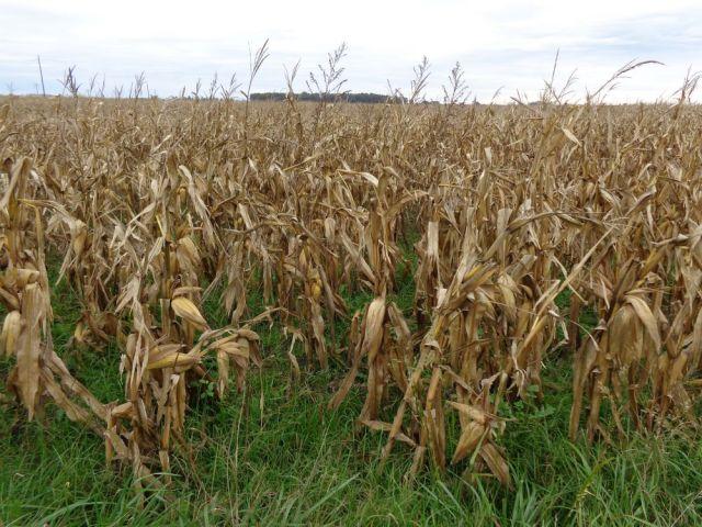 Así viene la venta de la cosecha según los datos del Gobierno