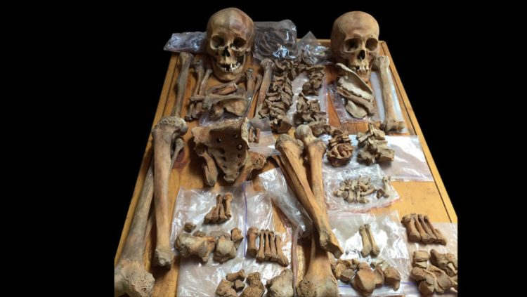 Archaeologists would these skeletons of two people buried in an ancient tomb in Mongolia. The woman (left) may have been a horse-riding, bow-and-arrow-wielding warrior. Photo by Christine Lee.