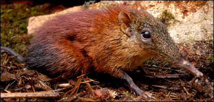 The new mammal (Francesco Rovero)