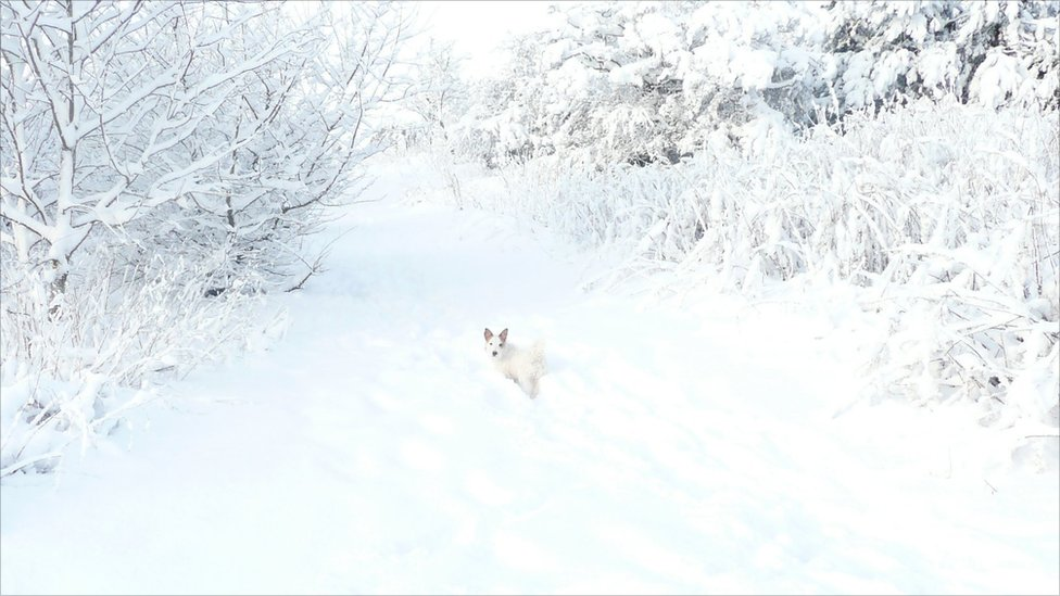Puppy Basil in the snow: Photo: Fiona Meek