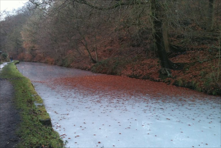 Red autumnal leaves fall on a frozen canal.