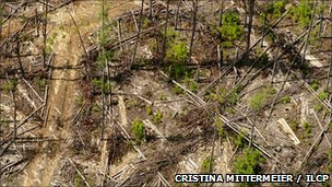 Logger Madagascan forest