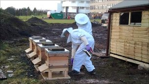 Bee hives at Ninewells Hospital