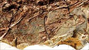 Fosilin içi,nde en az 15 embriyonun kafaları gözlemlenmekte