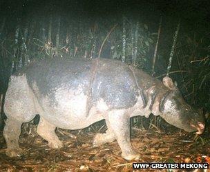 A Javan rhino is captured on camera in Vietnam's Cat Tien National Park (Image: WWF Greater Mekong)