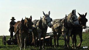 Amish farmer 1 November 2011