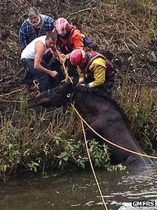 Molly was helped out of the river by firefighters