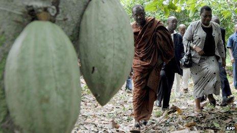 Coca plantation, Ivory Coast