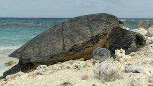 Turtle in amongst rubbish