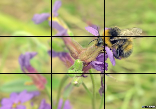 Bumblebee on flower composed to rule of thirds convention