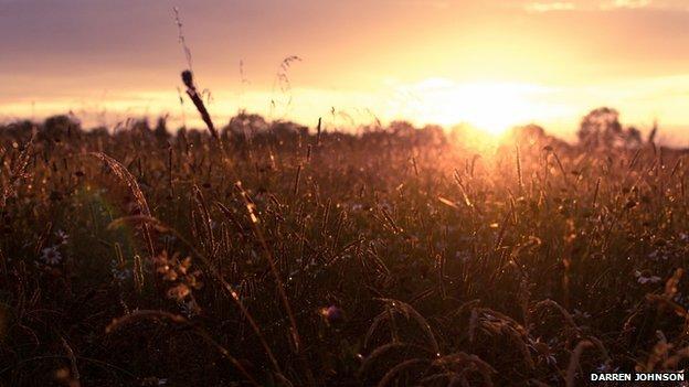 Sunset through a field of grass
