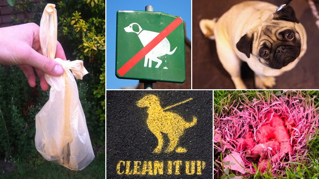 "Composite pictures including a dog poo bag, a ""clean it up"" sign, and a guilty looking dog"