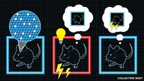 This cartoon explains how Dr Tonegawa's team created a false memory in the brain of mice