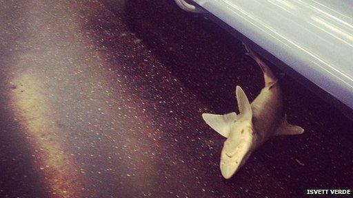 Shark on New York subway