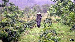 Farmer in rain, Bolaven plateau (2003)