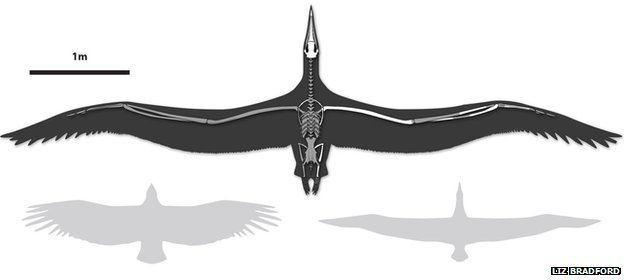 Reconstruction of Pelagornis sandersi with a California Condor (lower left) and Royal Albatross (lower right) for scale