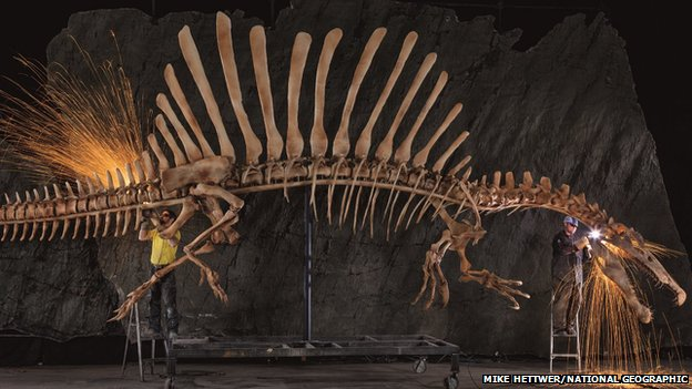 Life-size reconstruction of Spinosaurus