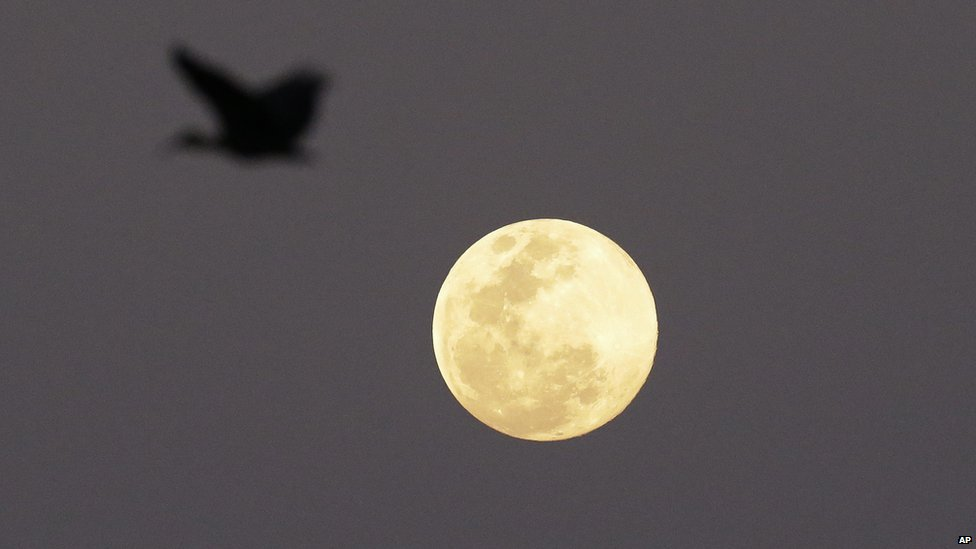 A Hadeda Ibis bird flies over as the full moon rises in the distance on 8 September 2014, in Johannesburg, South Africa