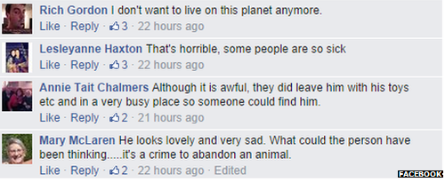 Comments on Facebook about Kai the abandoned dog