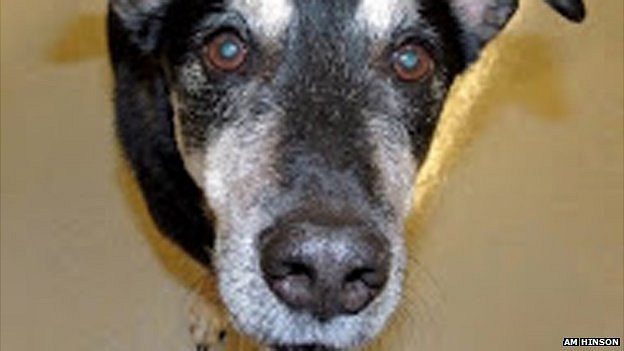 Frankie the dog