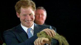 Resultado de imagen para prince harry reptilian