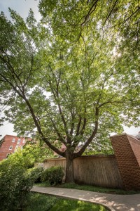 Trees-123