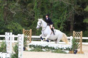Belmont Equestrian Jumper
