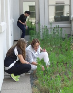 Biology Summer Scholars on Green Roof