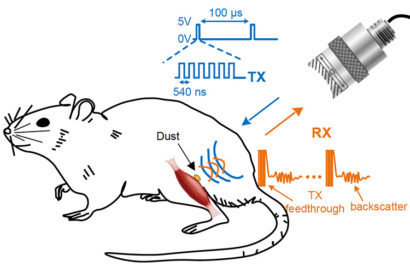 A sensor implanted on a peripheral nerve is powered and interrogated by an ultrasound transducer. The backscatter signal carries information about the voltage across the two electrodes. The 'dust' mote was pinged every 100 microseconds with six 540-nanosecond ultrasound pulses.