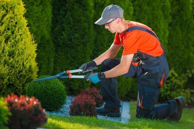 come fare il giardiniere in proprio