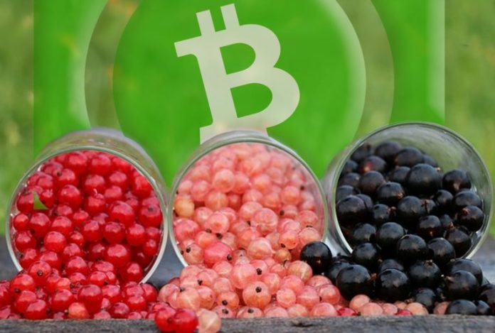 The Benefits of Tokens Built on Bitcoin Cash Outshine the Competition