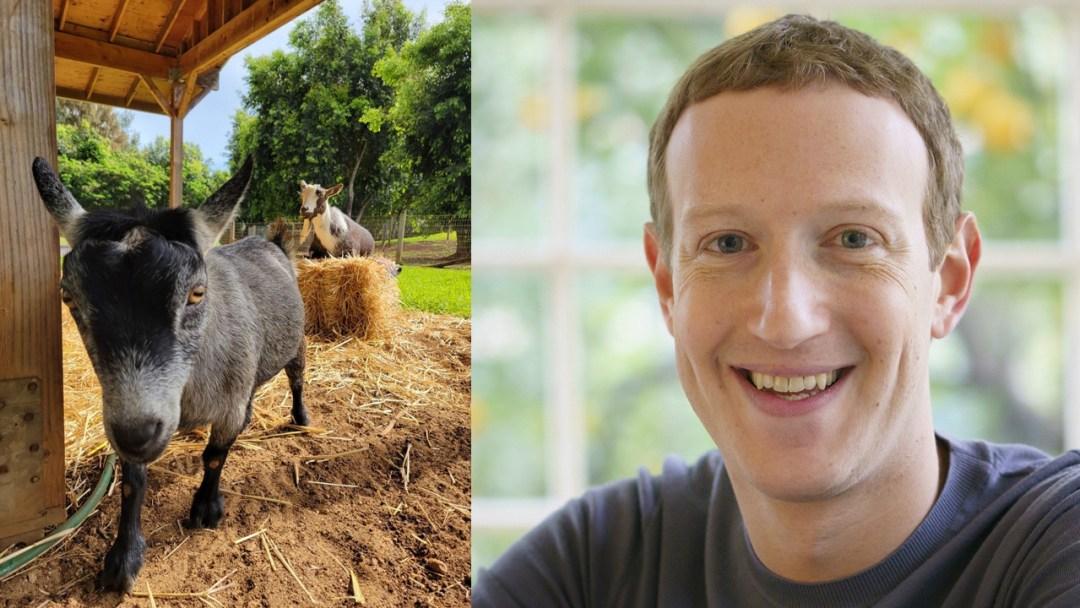 Mark Zuckerberg's Goat,
