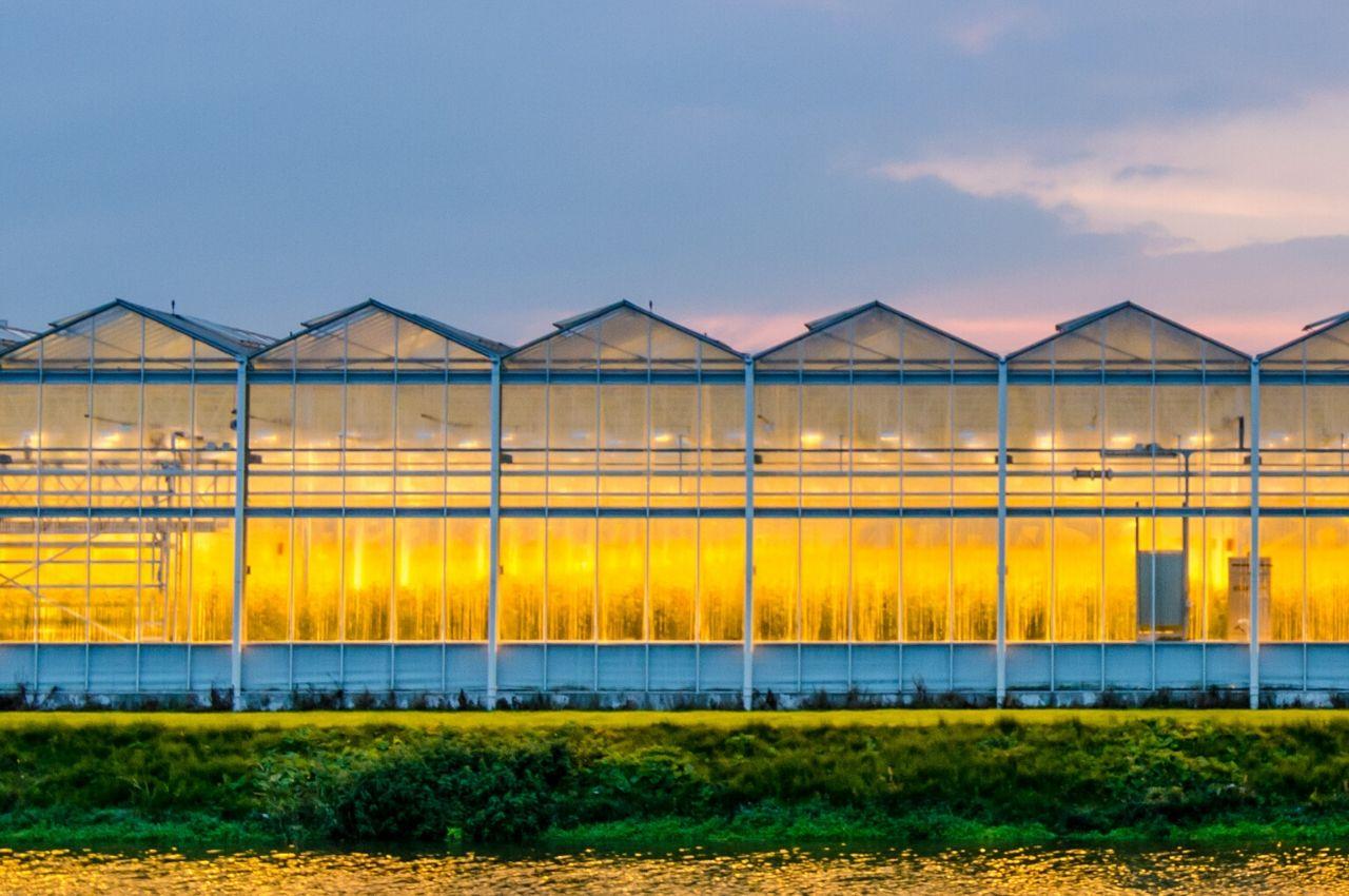 successful greenhouse light plan