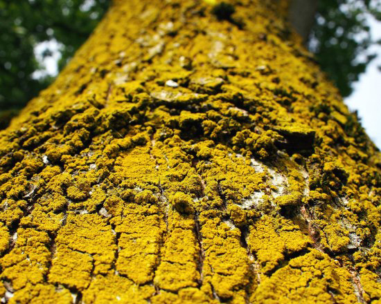 Anticancer drug Taxol discovered in the bark of a tree
