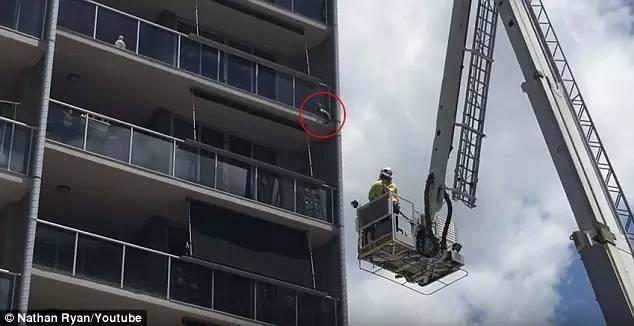 澳洲消防员全力拯救喵星人,沒想到下一秒,讓圍觀的人都笑瘋了⋯⋯